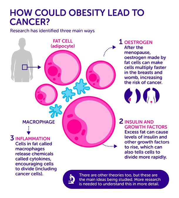 obesity cause cancer_v02-01